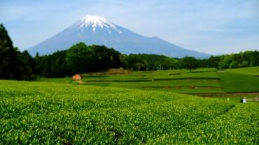 Green tea, fresh view