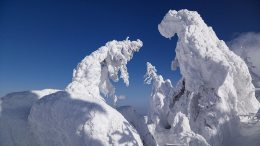 Zao Snow Monsters