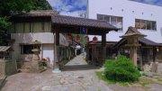 Aoishidatamidori