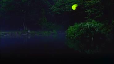 Hotaru – Firefly