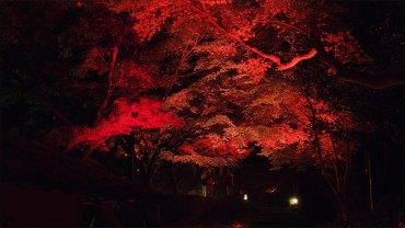 Tokyo Red Garden – Happo-En
