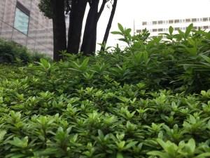 striving_green