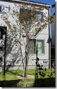 Garden symbol tree 5876