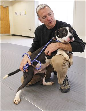 Tim Racer, co-founder of BADRAP in California, holds Michaela at Lucas County Canine Care & Control in Toledo.