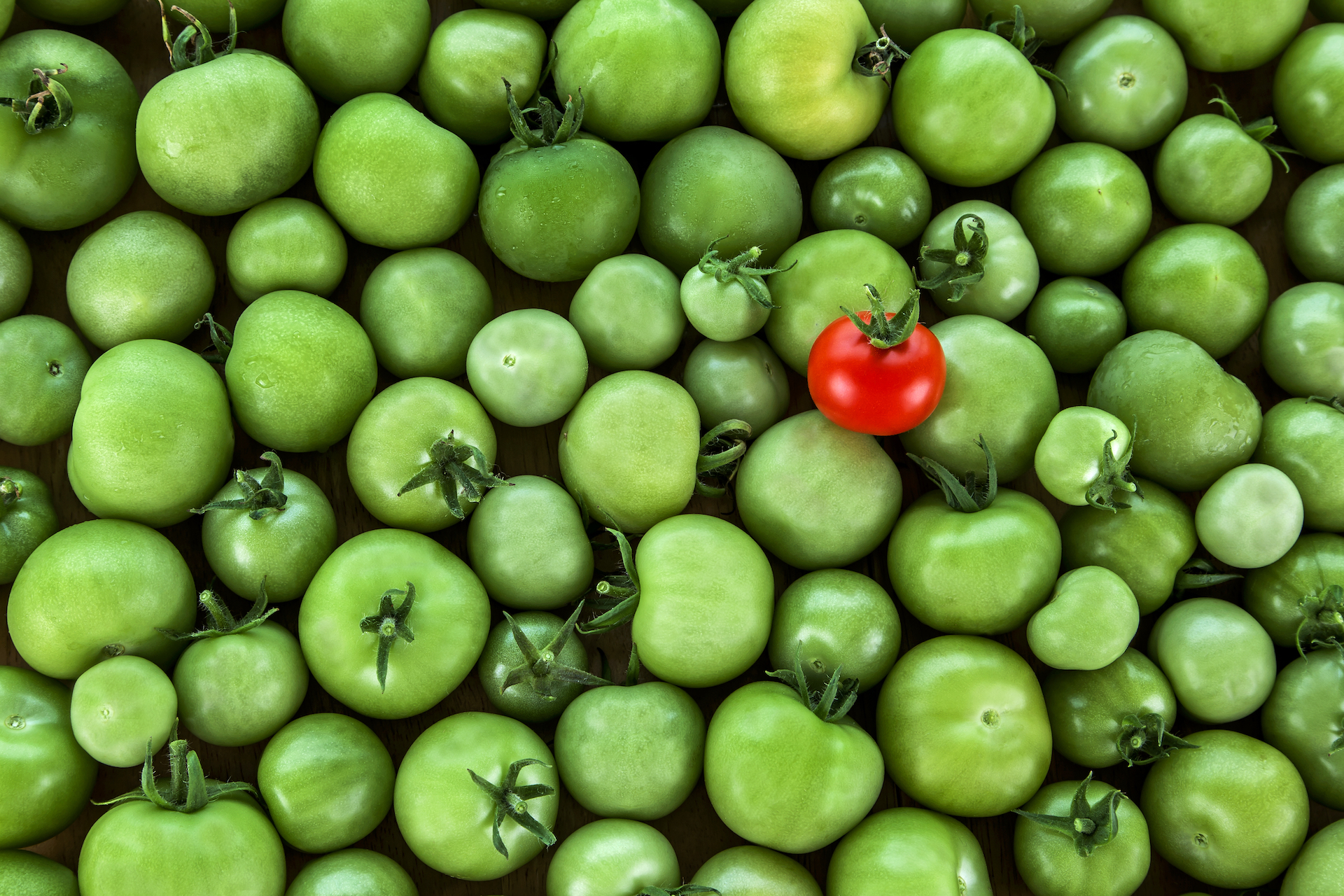 green-tomato-red-tomatoes