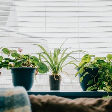 plants in windowsill