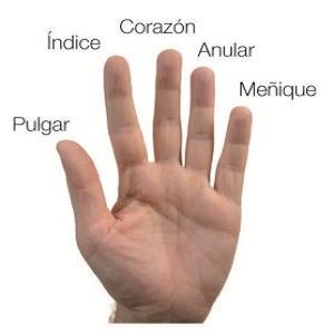 Significado De Los Dedos De La Mano Escucha Tomatis Y Terapias