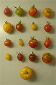 Alle Tomaten 2007 (Bildquelle: Henry)