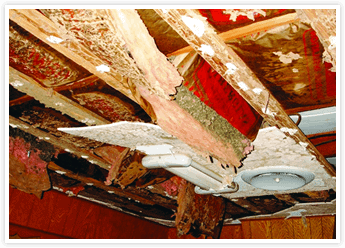 How Do Termites Damage Your Roof with Tom Byer Roofing Service in Orange County
