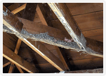 The Signs of Termite Damage with Tom Byer Roofing Service in Orange County