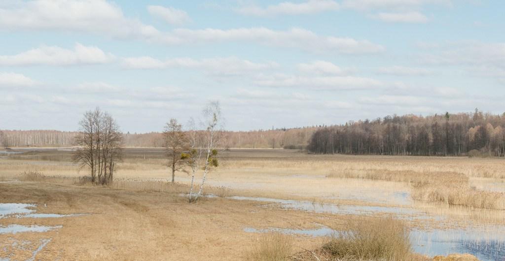 Narewka_river_valley_header