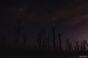 Starry Night at Elk Island