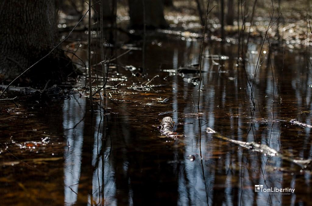 Down by the River Carpenter Lake Nature Preserve, Southfield, Michigan Photography | Tom Libertiny