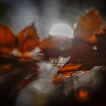 Lidt hygge billeder fra efteråret og vinter 2018. 1