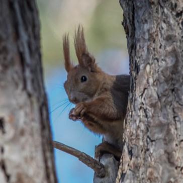 Egern fra Gåsemosen (Rørvig) Uge 18.