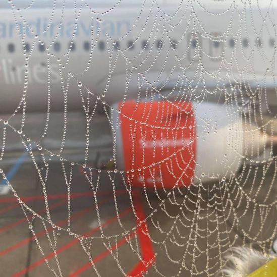 Morgendis i Kastrup Lufthaven 2020. 1