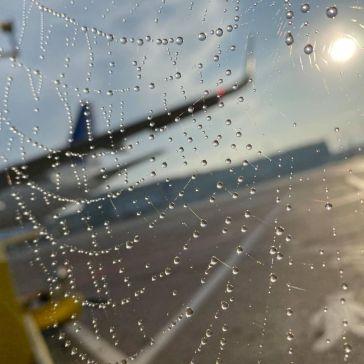 Morgendis i Kastrup Lufthaven 2020. 3