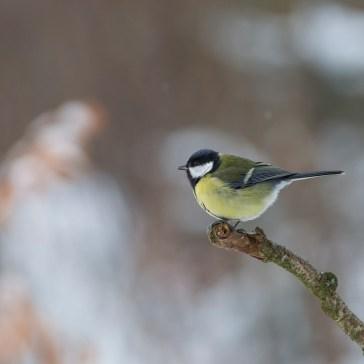 Lige lidt fugle i Gribskov. 5