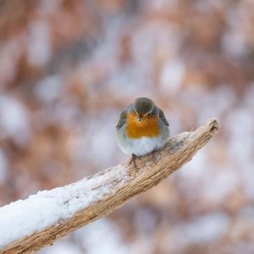Lige lidt fugle i Gribskov. 2