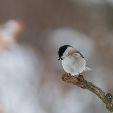 Lige lidt fugle i Gribskov. 4