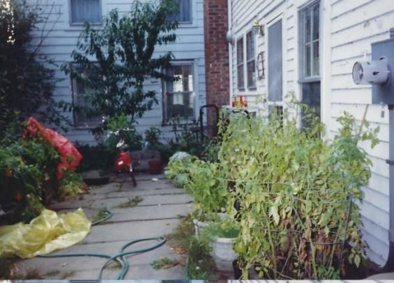 Back Yard Tomato Plants