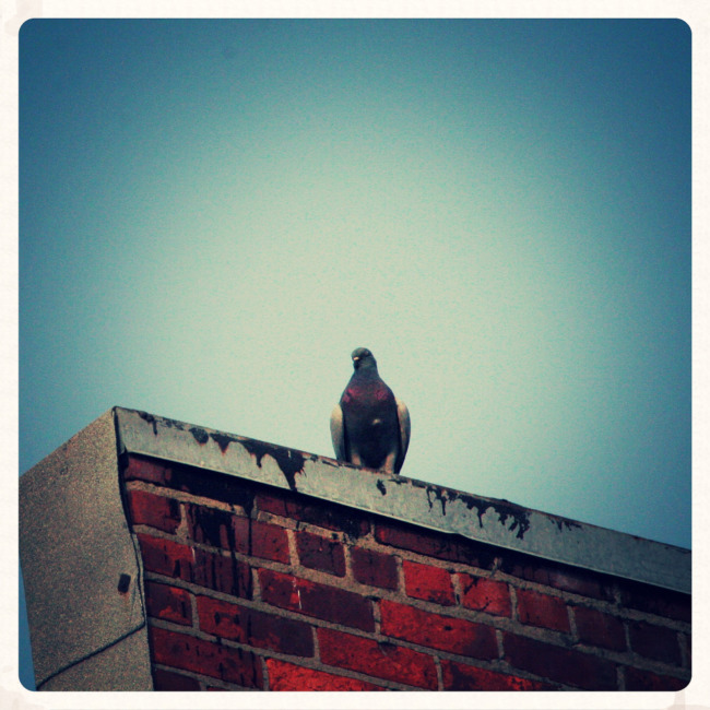 Bird On A Roof Top