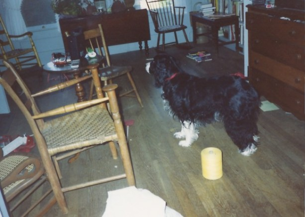 Dog In Cluttered Room