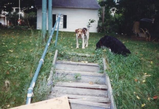 Dogs In Back Yard