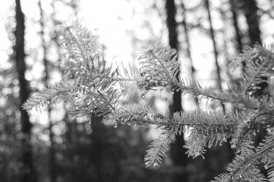 Forest Sunrise (6)
