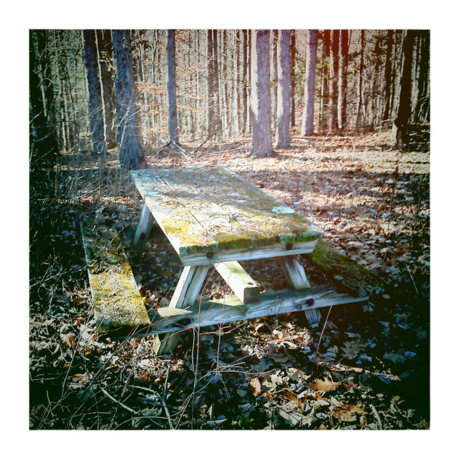 Picnic Table Covered With Moss