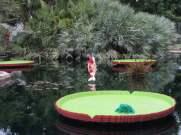 San Antonio Botanical Garden 12