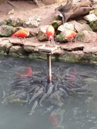 San Antonio Zoo 21