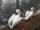 San Antonio Zoo 24