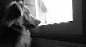 誰かを待っている犬