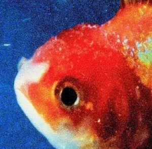 Vince Staples Big Fish Theory Recensione