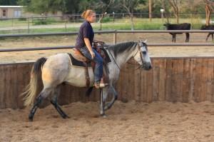 Hoss - grey gelding (2)