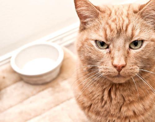 猫-自動-給餌-器-口コミ