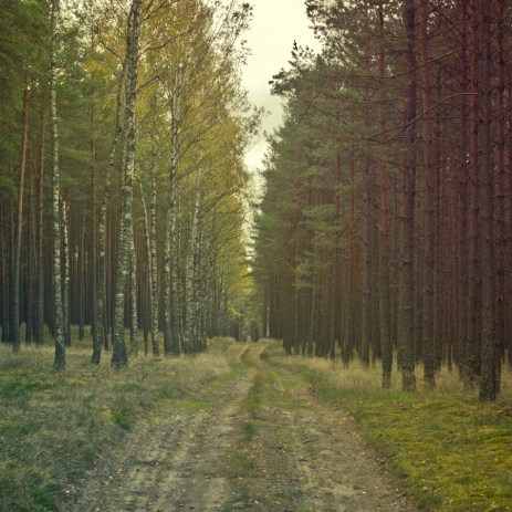 forest_1_08
