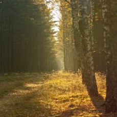 forest_2_18