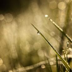 sparkles_03