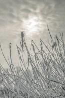 winter_fell_15