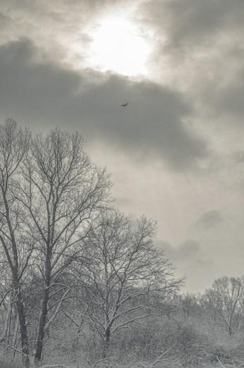 winter_fell_17