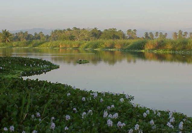 Laguna del Tule