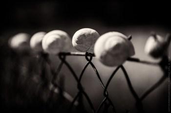 Šnečí plot
