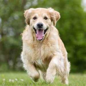 Tondeuses LIVERYMAN pour chiens