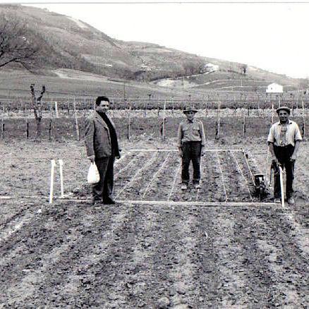 pesaro-1960-1970-pesaro-montecchio-semina-campi-sperimentali-marzo-1962.jpg