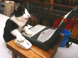 Premio ignobel 2000 verificare se un gatto ha camminato sulla mia tastiera