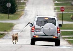 lazy-dog-walker