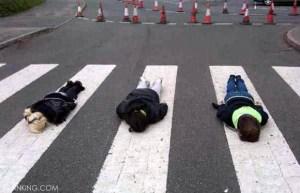 Abbey-Road_plank7