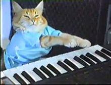 220px-Keyboard_cat